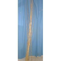 Tuteur bambou droit