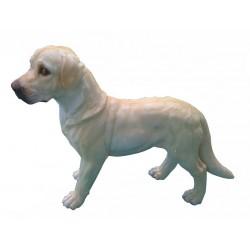 Chien Labrador debout