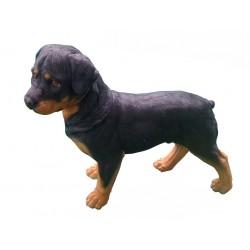 Chien Rottweiler debout