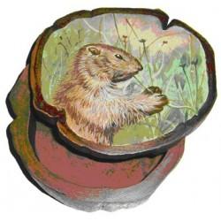 Boite marmotte