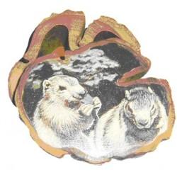 Boite 2 marmottes