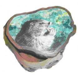 Boite marmotte grignotant